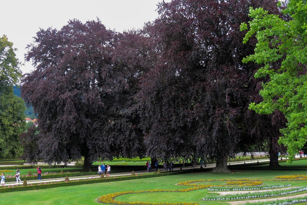 Фиолетовые деревья.