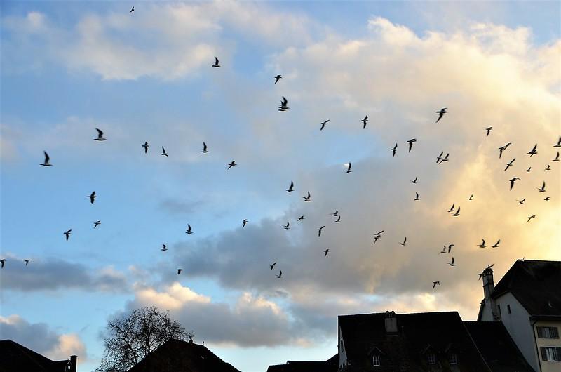 Birds in flight 11.12 (9)