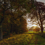 Collierley Wood