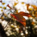 Herbst Bokeh in Tarbek - Schleswig-Holstein - Deutschland