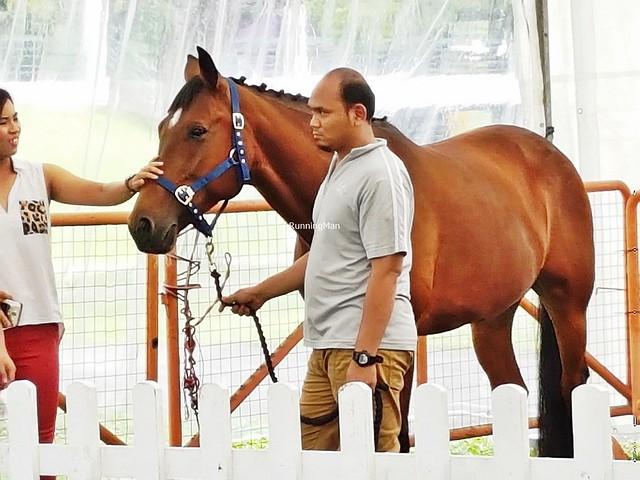 Horse Petting