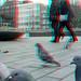 Duiven Hoogstraat Rotterdam 3D