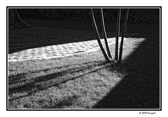 long palm shadows