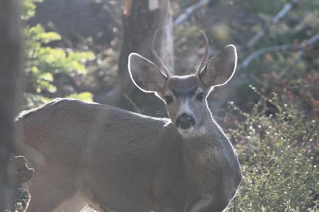 At Yosemite NP, California, Canon EOS REBEL T1I, Canon EF 70-200mm f/4L