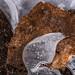 Herfst in ijs gevangen/Ice textures
