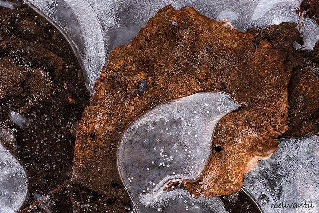 Herfst in ijs gevangen, Nikon D750, AF-S VR Micro-Nikkor 105mm f/2.8G IF-ED