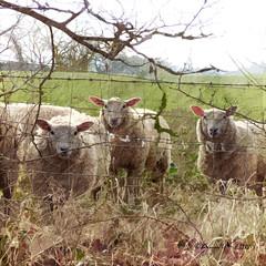 watching me...watching ewe!