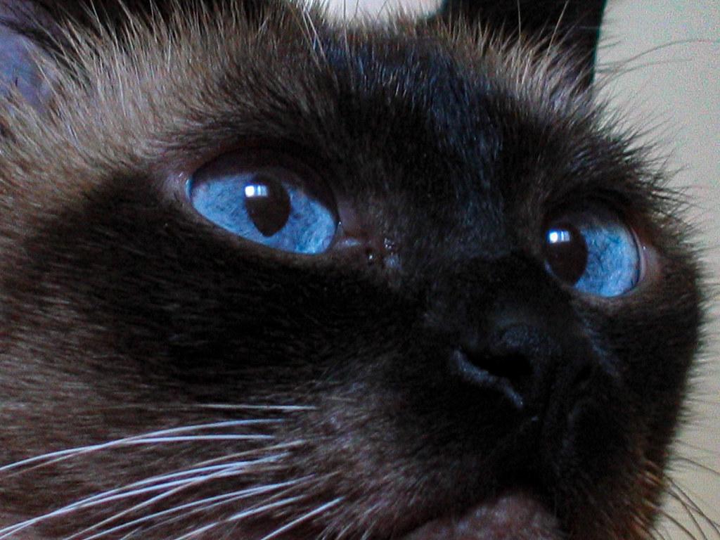 Fotos de animales de todo tipo incluyendo mascotas que más te gustan - Página 14 46315110631_143a84e57a_b