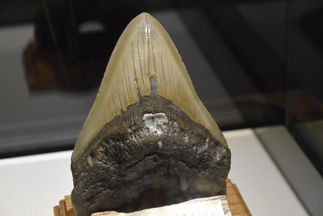 Inaugurazione mostra Paleomare