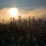 sunrise Uetliberg