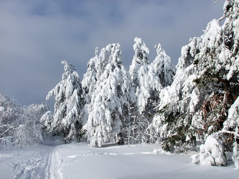 лес под снегом
