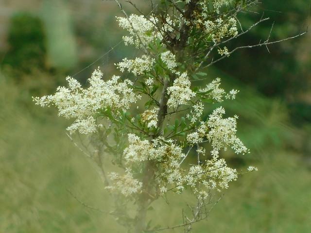 Nature, Nikon COOLPIX B500