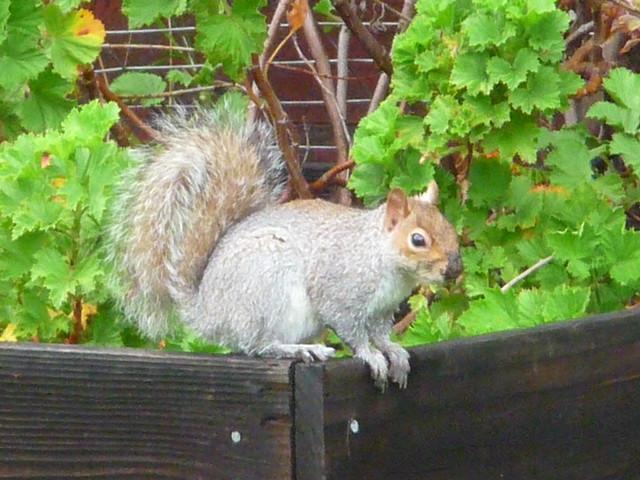 Photo:squirrel 1 17 19 By safoocat