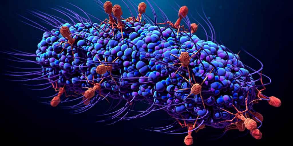 Pourquoi les phages ne sont pas utilisés contre les bactéries