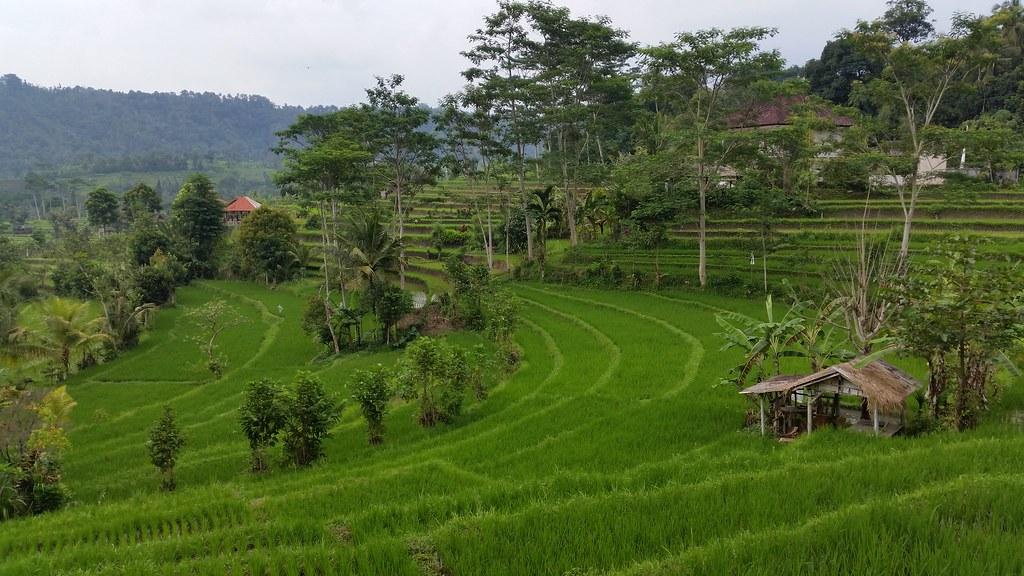 Pola ryżowe Sidemen Bali