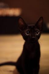 awwsfordays:Tiny meow learn more: www.linksplit.io/5ydb7