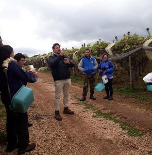 uva palmisano 2018 (6)