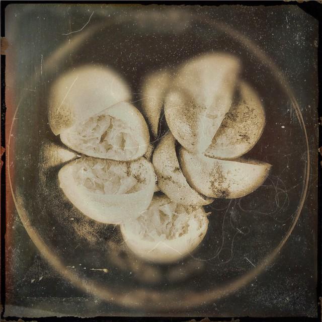 Doris's oranges-15559
