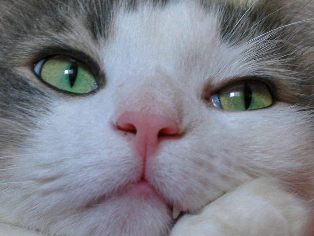 Fotos de animales de todo tipo incluyendo mascotas que más te gustan - Página 14 44498465490_f406ea2210_b