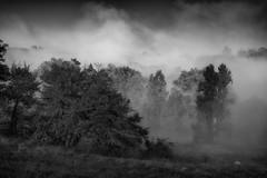 Arbres dans la brume - Photo of Pazayac