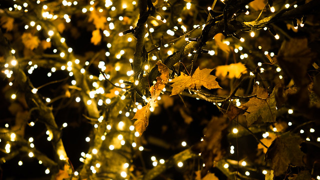 Herbstbeleuchtung, Olympus E-M1, Olympus M.Zuiko Digital 25mm F1.8