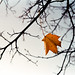Autumn by tercrossman87