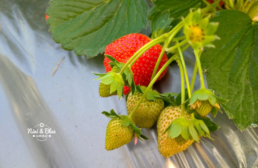小農夫草莓園03