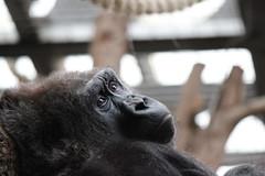 2013 02 09 London Zoo (21)