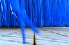 blau regen tanz
