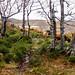 Parque Natural de los Collados del Asón. Cantabria.