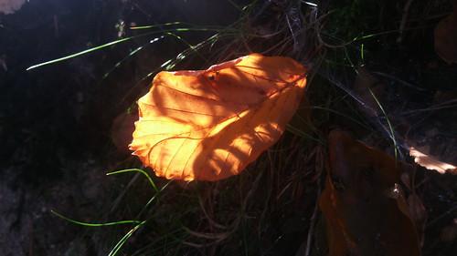 20170930 03 101 ostbay Herbst Blätter gelb