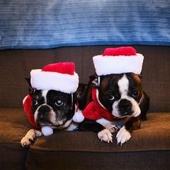 I hope you are enjoying your holidays