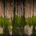 Trees by David McCudden