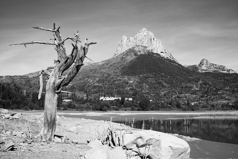 El árbol y la Foratata