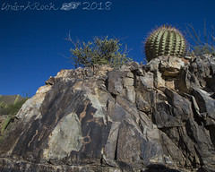 Hohokam Pictographs, fishhook barrel, King Canyon, Tucson Mountain Section, Saguaro National Park, Pima County, Arizona