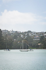 313.364.2018 Sailboats in Auckland Harbour, New Zealand