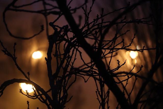 November evening III