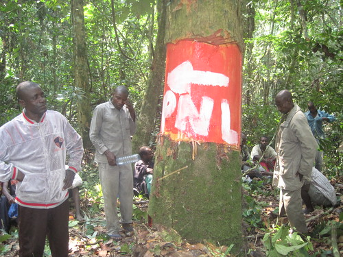 DELIMITATION Chef de groupe Kori sur la limite Tchombelome