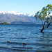 New Zealand - Wanaka