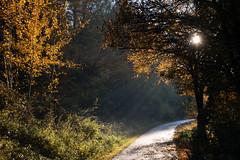 Chemin de lumière - Photo of Zinswiller