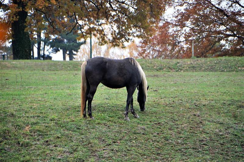 Horses 10.11 (3)