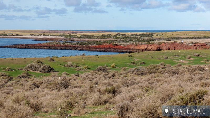Ir a Punta Tombo IMG_6545