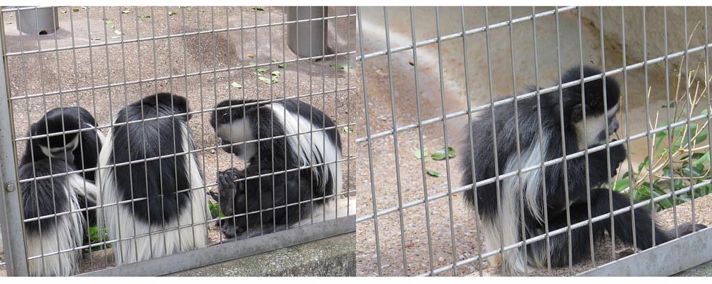 TOKYO ZOO上野動物園(兩光媽咪柳幼幼) (4)