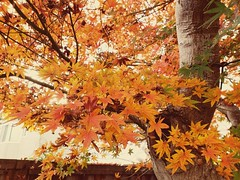 Leaves of golden color.