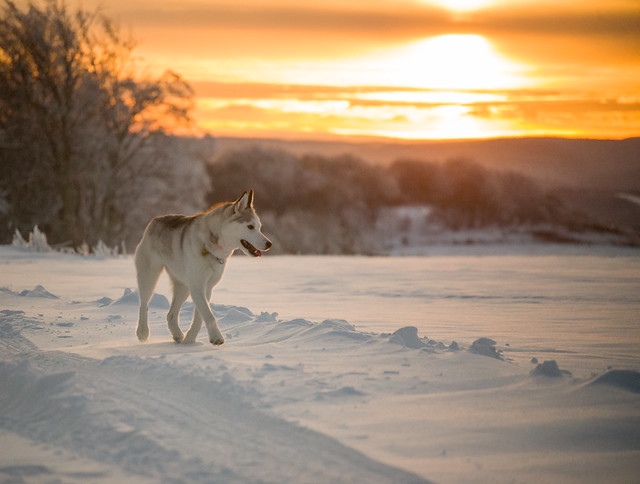 20181225 Sunset Dog Play_44