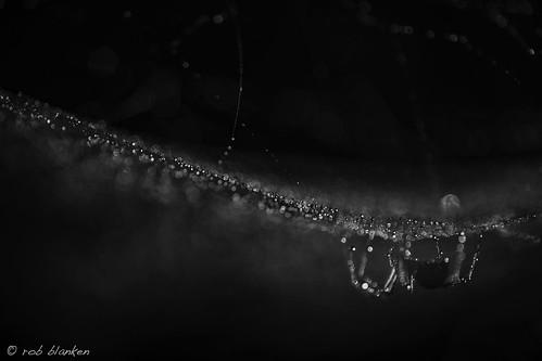 Bubble spider