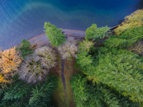 lakecrescent olympicpeninsula beach aerial drone dji phantom3 autumn fall colorful fir cedar forest nature blue water travel meadow path rocky washington westernwashington washingtonstate woman walking trail environment lake pacificnorthwest northwest overhead edmundlowephotography edmundlowe usa america allmyphotographsare©copyrightedandallrightsreservednoneofthesephotosmaybereproducedandorusedinanyformofpublicationprintortheinternetwithoutmywrittenpermission