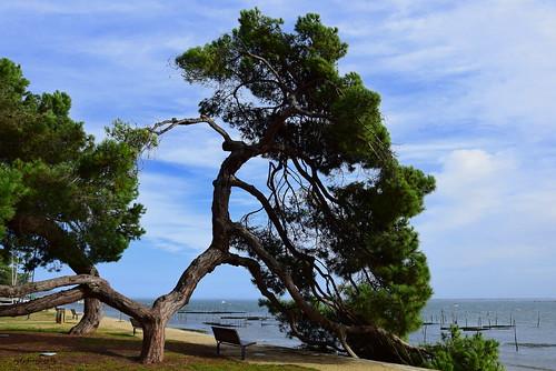 Un Jour..  Un arbre