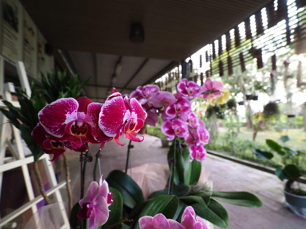 山上蘭科植物園 (4)