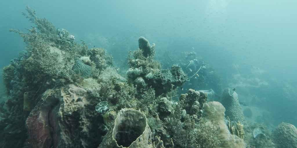 Le fond marin se dissout à cause de l'activité humaine